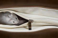 Chomik w torbie Fotografia Stock
