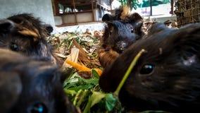 Chomikowi zwierzęta jedzą zdjęcie royalty free