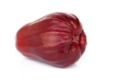 chomphu яблока подняло Стоковое Фото