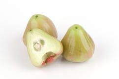 Chomphu thai name, Rose apple. (Eugenia javanica lamk. Family myrtaceae.),. Stock Photography