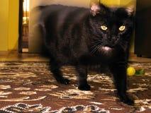 Chomutov, repubblica Ceca - 21 luglio 2017: occhi del gatto nero commovente durante il suo sesto compleanno immagini stock