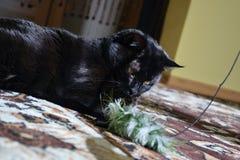 Chomutov Tjeckien - Juni 19, 2018 den svarta katten som namnges Violka, ligger på golv i vardagsrummet och spelar med leksaken på royaltyfri fotografi