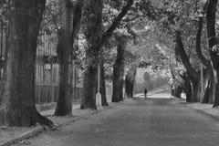 2016/09/24 - Chomutov, Tschechische Republik - Kastaniengasse in der Straße Premyslova in Chomutov-Stadt mit einer Frau, welche d Lizenzfreie Stockfotografie