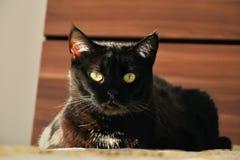 Chomutov, Tsjechische republiek - 13 Mei, 2018: de zwarte kat genoemd Violka rust op bed in slaapkamer tijdens zonsondergang Stock Fotografie