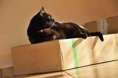 Chomutov, Tsjechische republiek - 30 September, 2018: zwarte kat Violka die op doos rusten stock foto's