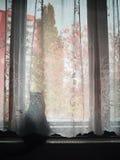 Chomutov, Ustecky kraj, republika czech - Październik 30, 2016: czarny kot ogląda nadchodzącą jesień wymieniał Violka Zdjęcie Stock