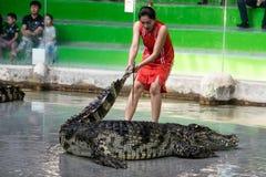 Chon Buri TAJLANDIA, Styczeń, - 1 2015: krokodyla przedstawienie przy crocodil Zdjęcia Royalty Free