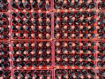 Many coke or coca-cola bottle in a plastic crates for delivered to customers. Chon Buri, Thailand - FEBRUARY 06, 2018 : Many coke or coca-cola bottle in a stock photos