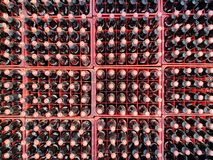 Many coke or coca-cola bottle in a plastic crates for delivered to customers. Chon Buri, Thailand - FEBRUARY 06, 2018 : Many coke or coca-cola bottle in a stock image