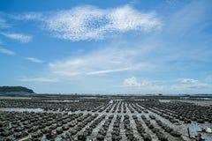 Chonburi ANG Sila αγροτικής απαγόρευσης στρειδιών Στοκ φωτογραφία με δικαίωμα ελεύθερης χρήσης