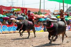 Chonburi Buffalo Races Stock Photo