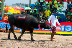Chonburi Buffalo Races Stock Photo