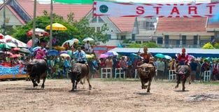 Chonburi Buffalo Races Royalty Free Stock Photo