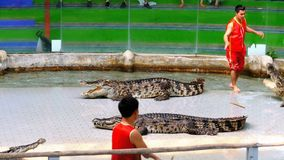Crocodile show. Animal trainer and crocodiles in the arena. Thailand. Asia. CHONBURI, THAILAND, JANUARY 17, 2018: Crocodile show. Animal trainer and crocodiles stock video