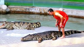 Crocodile show. Animal trainer and crocodiles in the arena. Thailand. Asia. CHONBURI, THAILAND, JANUARY 17, 2018: Crocodile show. Animal trainer and crocodiles stock footage
