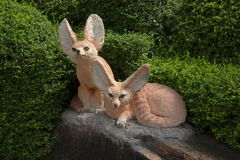 Two fox in Nong Nooch in Thailand stock photo
