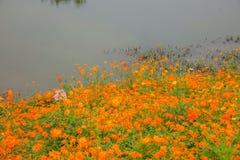 Chongqing Banan-de bloemen van de de tuinoever van het meer van de bloemenwereld in volledige bloei Stock Foto
