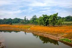 Chongqing Banan-de bloemen van de de tuinoever van het meer van de bloemenwereld in volledige bloei Stock Afbeelding