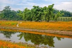Chongqing Banan-de bloemen van de de tuinoever van het meer van de bloemenwereld in volledige bloei Royalty-vrije Stock Foto's