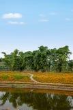 Chongqing Banan-de bloemen van de de tuinoever van het meer van de bloemenwereld in volledige bloei Stock Afbeeldingen