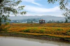 Chongqing Banan florece las flores de la orilla del lago del jardín del mundo en la plena floración Imagen de archivo libre de regalías
