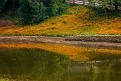 Chongqing Banan florece las flores de la orilla del lago del jardín del mundo en la plena floración Imágenes de archivo libres de regalías