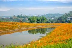 Chongqing Banan floresce flores da beira do lago do jardim do mundo na flor completa Foto de Stock