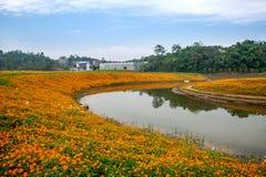 Chongqing Banan floresce flores da beira do lago do jardim do mundo na flor completa Fotos de Stock