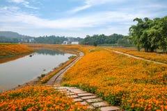 Chongqing Banan floresce flores da beira do lago do jardim do mundo na flor completa Imagem de Stock Royalty Free
