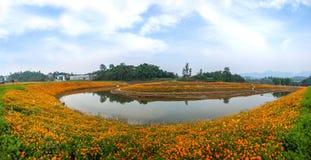 Chongqing Banan floresce flores da beira do lago do jardim do mundo na flor completa Imagens de Stock Royalty Free
