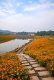 Chongqing Banan flowers world garden lakeside flowers in full bloom Stock Photography