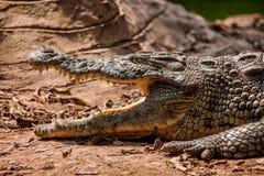 Chongqing crocodile center of the crocodile pool Royalty Free Stock Photography