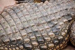 Chongqing crocodile center of the crocodile pool Stock Image