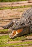 Chongqing crocodile center of the crocodile pool Stock Photo