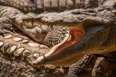Chongqing crocodile crocodile pool center Royalty Free Stock Image
