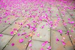 Chongqing Dadukou okręgu park z podłoga trójbok śliwka Fotografia Stock