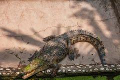 Chongqing krokodyla centrum krokodyla basen Fotografia Royalty Free