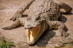 Chongqing krokodyla krokodyla basenu centrum Obrazy Royalty Free