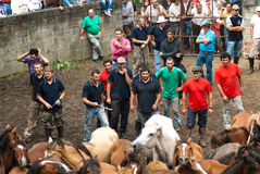 Choose horses. PONTEVEDRA - AUG 2: Horse trainers, choose wild horse in a traditional celebration Haircut the beasts on August 2, 2009 in Pontevedra, Spain Stock Photography