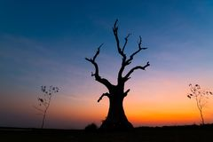 Dead tree at sunset Mandalay , Myanmar. Choose subject have interest shape royalty free stock image