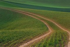 Choose Your Path. Pathway down a open field of new green plants stock photos