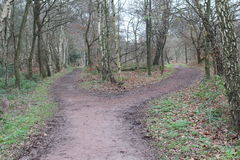 Choose your Path. Forest Scene offering a choice of paths Royalty Free Stock Photos
