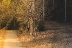 Choose your path Royalty Free Stock Photography