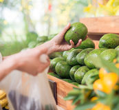 Choosing avocados Royalty Free Stock Image