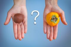 Choosing between chocolate cake and persimmons royalty free stock photos