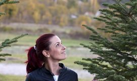 Woman looking at conifer. A woman outside looking at a conifer tree Royalty Free Stock Photo