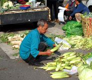 Choosing Corn at an Outdoor Market Stock Images