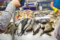 Choosing fresh fish Royalty Free Stock Photography