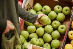 Free Choosing Green Apples Royalty Free Stock Image - 192966956