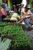 Choosing seedlings Stock Photo